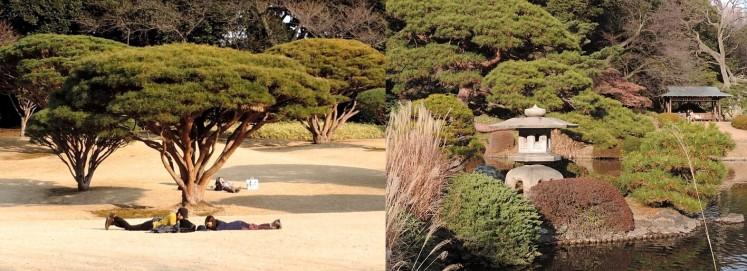 collage Shinjuku garden