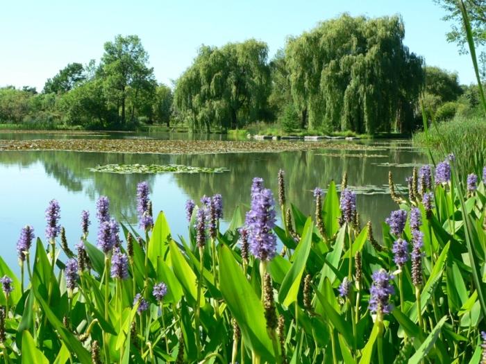 Le Jardin Botanique: n'est-ce pas le parc dont les frères Dufresne rêvaient?