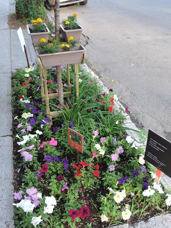 rue Desjardins 04