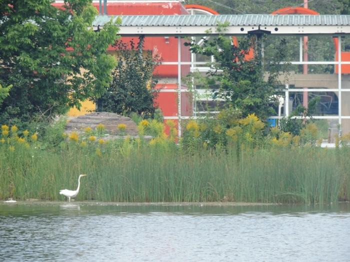 Parc Angrignon (2)