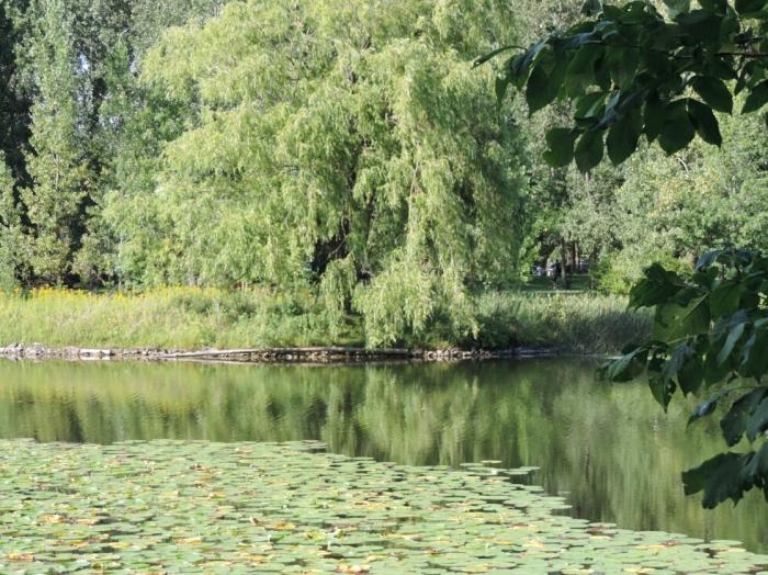 Parc Angrignon (6)