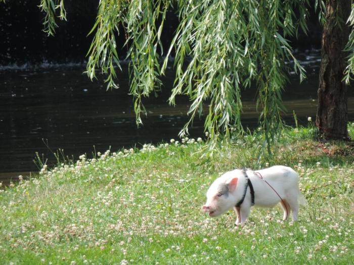 03 Parc de Westmount (6)