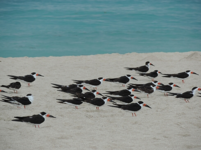01 plage South Beach (3)