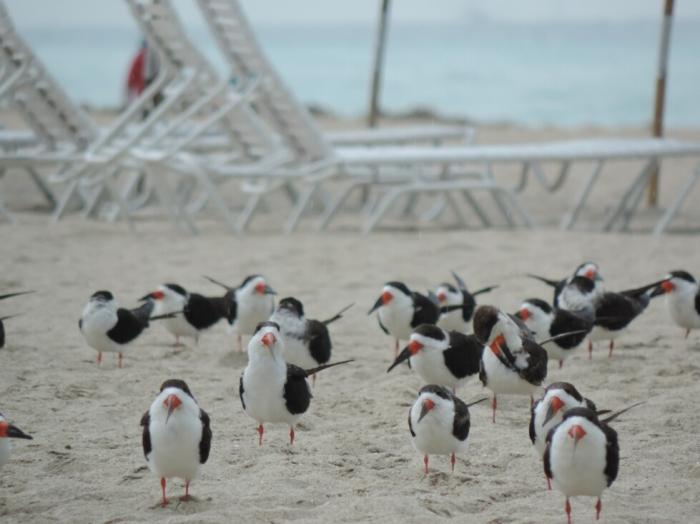 01 plage South Beach (4)