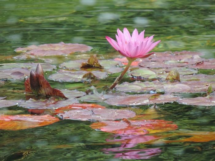 03 Miami Beach Botanical Garden (2)