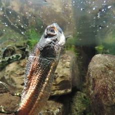 02 Zoo Ecomuseum (21)