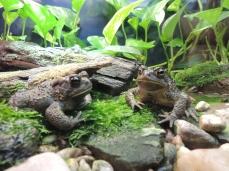 02 Zoo Ecomuseum (22)