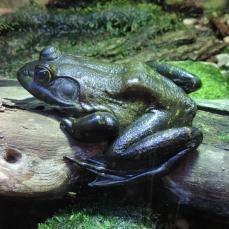 02 Zoo Ecomuseum (23)
