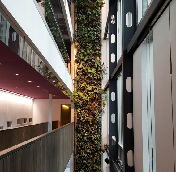 le mur végétal de la Maison du Développement durable