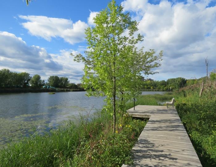 03 ile-des-Soeurs lac des Battures (10)